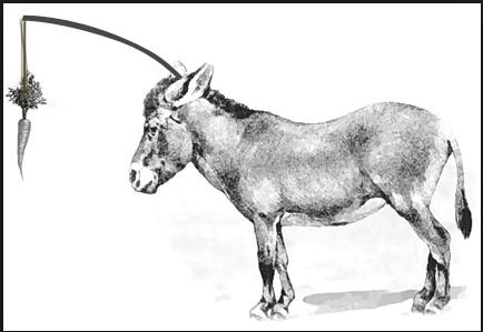 social media donkey carrot