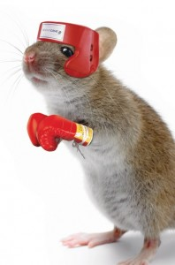 boxing mouse